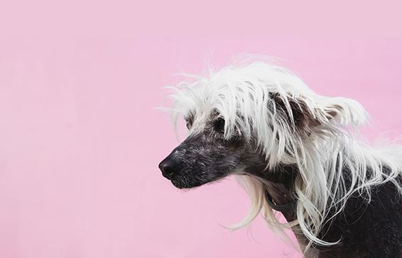 Peluqueria-canina-santander